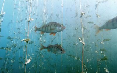 Seeschüttung bringt biologische Vielfalt